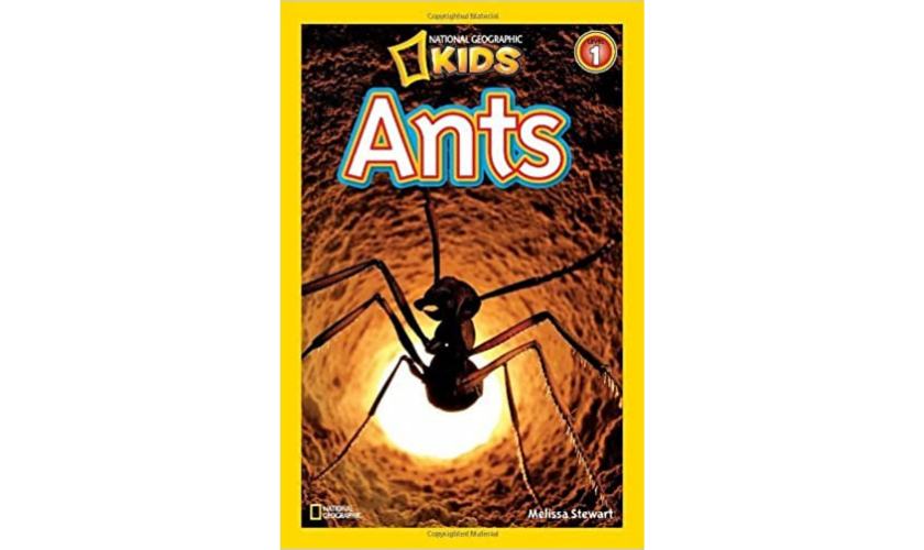 National Geographic Kids Ants